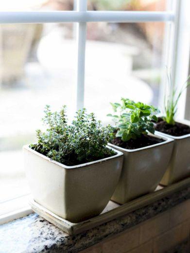 Indoor Herb Garden 11