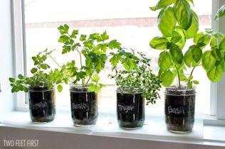 Indoor Herb Garden 6