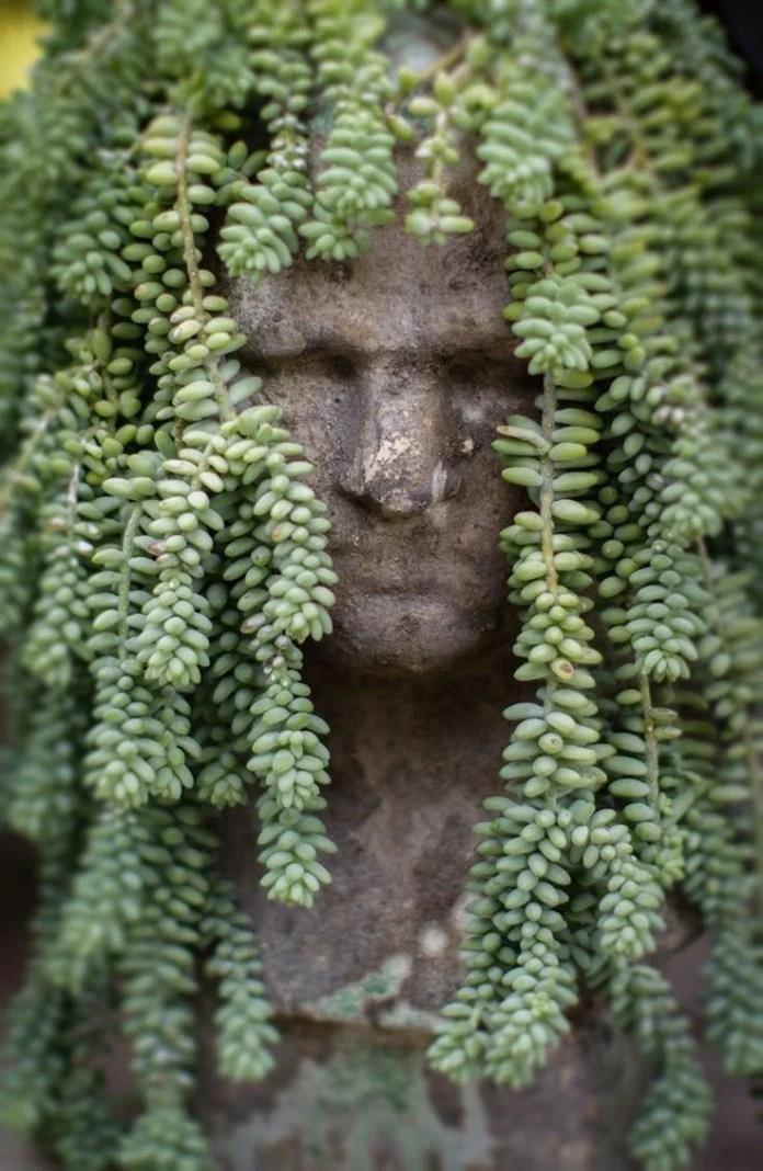 Succulent Planters Sale