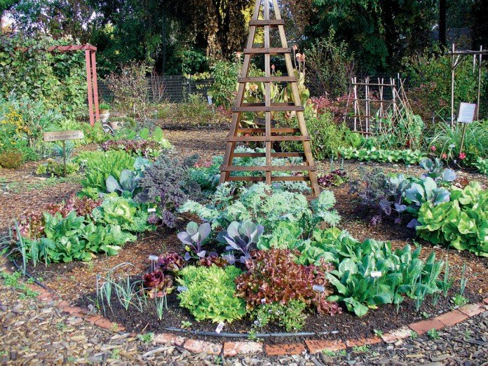 Edible Landscaping Ideas Design an Urban Vegetable Garden