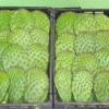 Cactus-Leaves-Fresh-Produce-Group.jpg