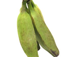BURRO-BANANA-FRESH-PRODUCE-GROUP-LLC.jpg