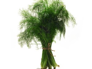 FENNEL-HERB-FRESH-PRODUCE-GROUP-LLC.jpg