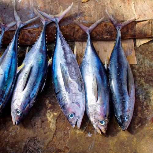 Order Fresh Seafood Fish Online Satara - Fresh Protino