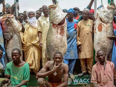 Man With Biggest Catch At Argungu Fishing Festival Gets N10m, Two Cars, Hajj Seats