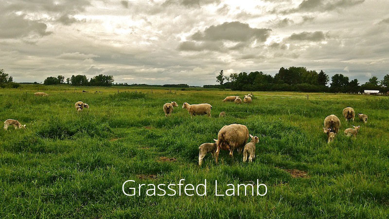 grassfed lamb grass-fed lamb
