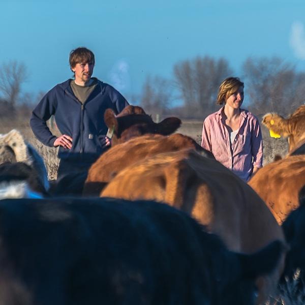 local farmers grassfed beef cattle family farm