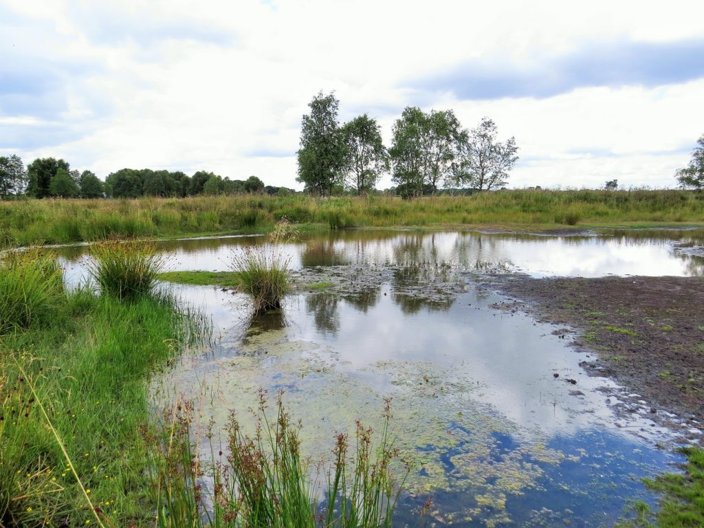 Freshwater Habitats Trust S 140k Fundraising Campaign