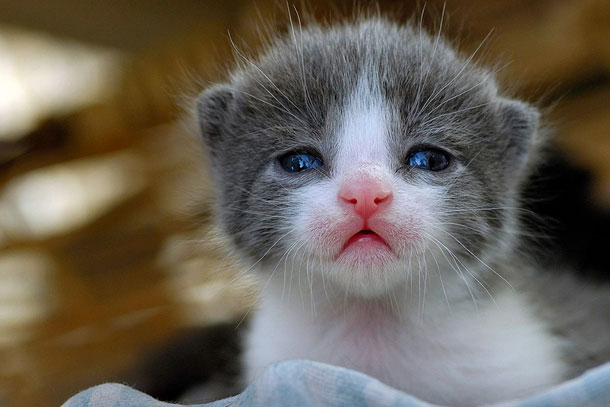 25 Adorables bebes animales  Fress