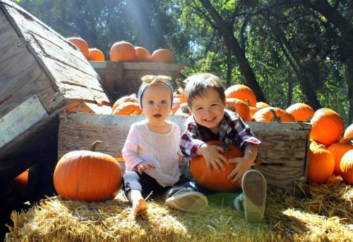 five pumpkin patches