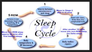The psychology of sleep   freudforthought