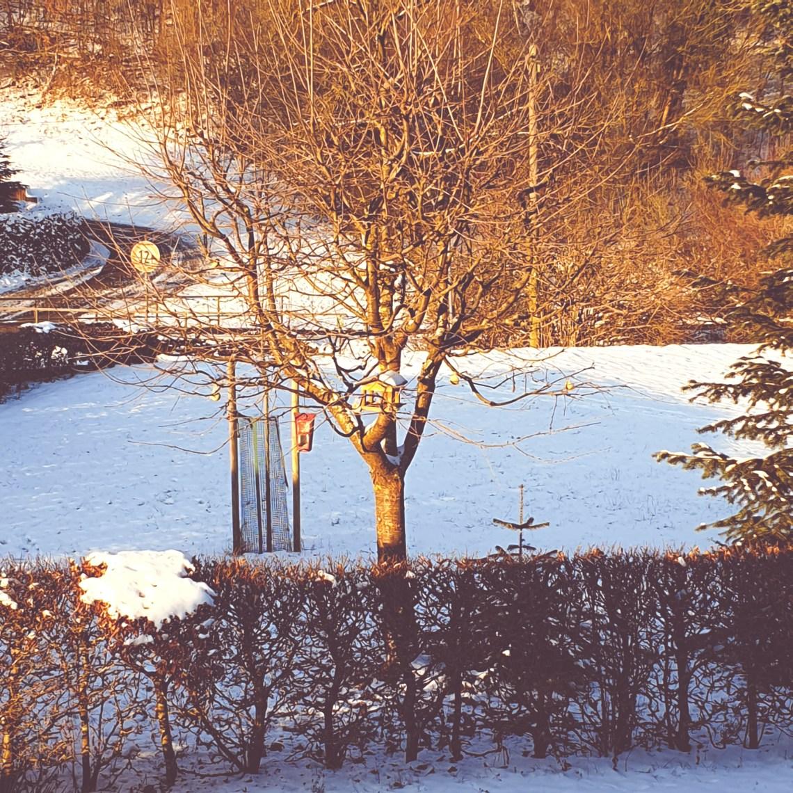 Vogelhaus morgens