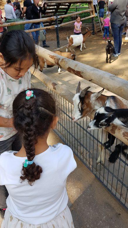 Ziegen füttern im Nürnberger Zoo