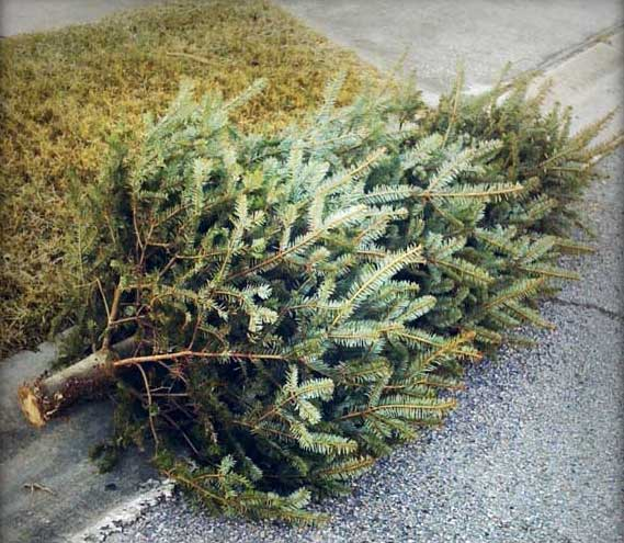 Disposing Of Christmas Trees: Disposing Of Christmas Trees, Old Batteries