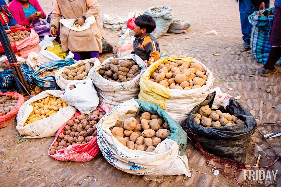 Potato Varieties Peru