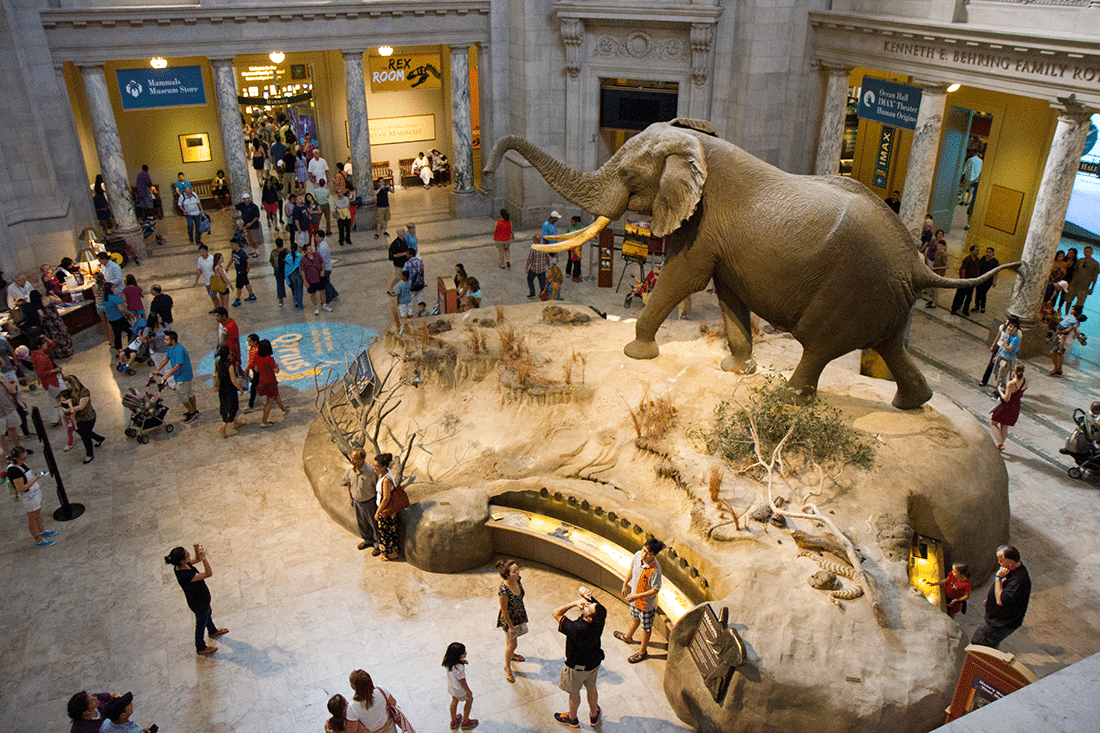 Smithsonian Natural History Museum Washington D.C.