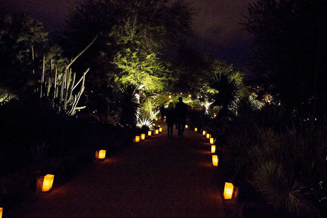 Desert Botanical Garden Phoenix- Luminarias Festival