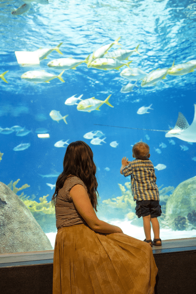Sea Life Aquarium Family Date