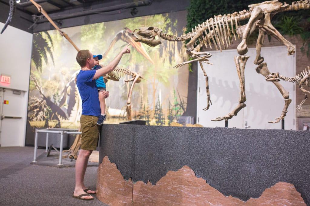 Arizona Dinosaur Museum