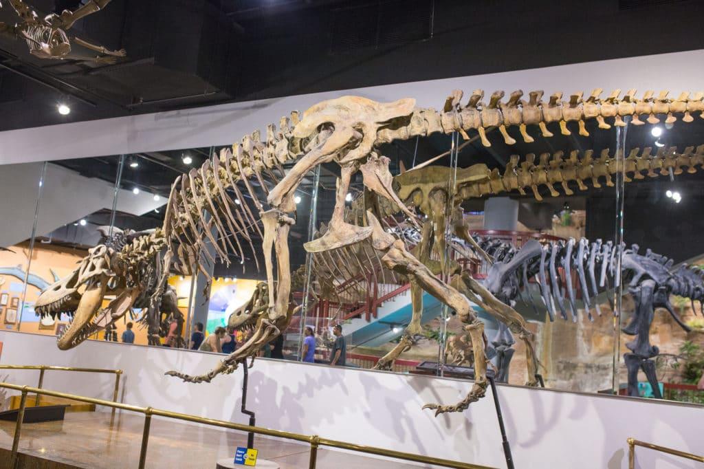 Mesa AZ Dinosaur Museum