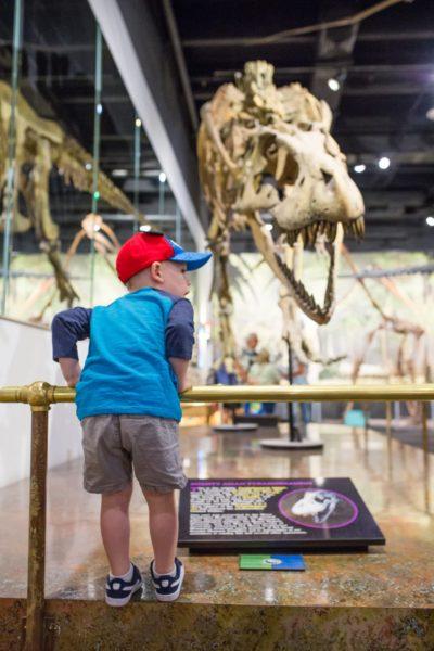 Natural History Museum Mesa Family Date