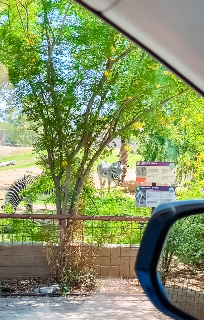 Drive Through Zoo