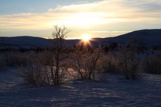 Stabbursdalen nasjonalpark