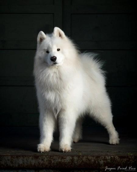 Fotografering af hund og kæledyr