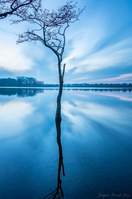 Ensomt træ i vandet