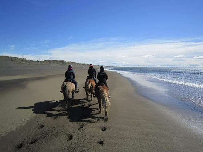 Beach horse riding tour friends in iceland