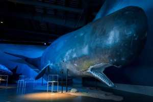 Whales museum friend in iceland