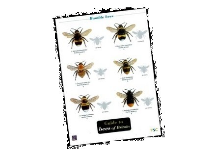 Solitary Bee Hive PLUS laminated field guide to British