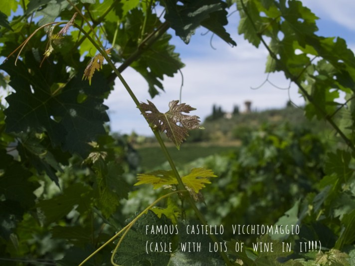 Our honeymoon in Tuscany