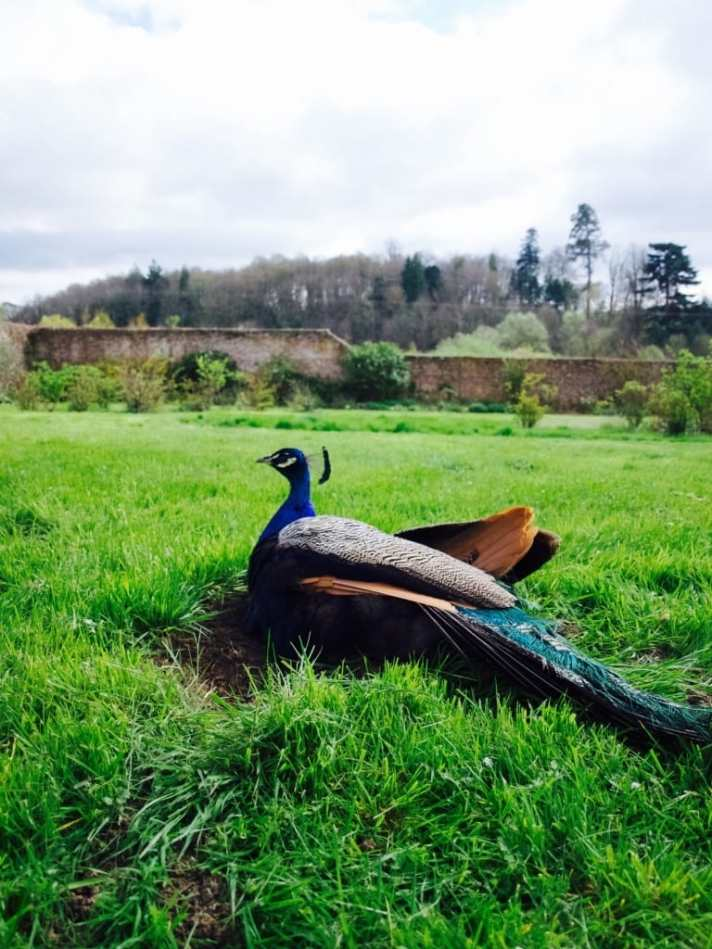 Devon in spring: Escot Park
