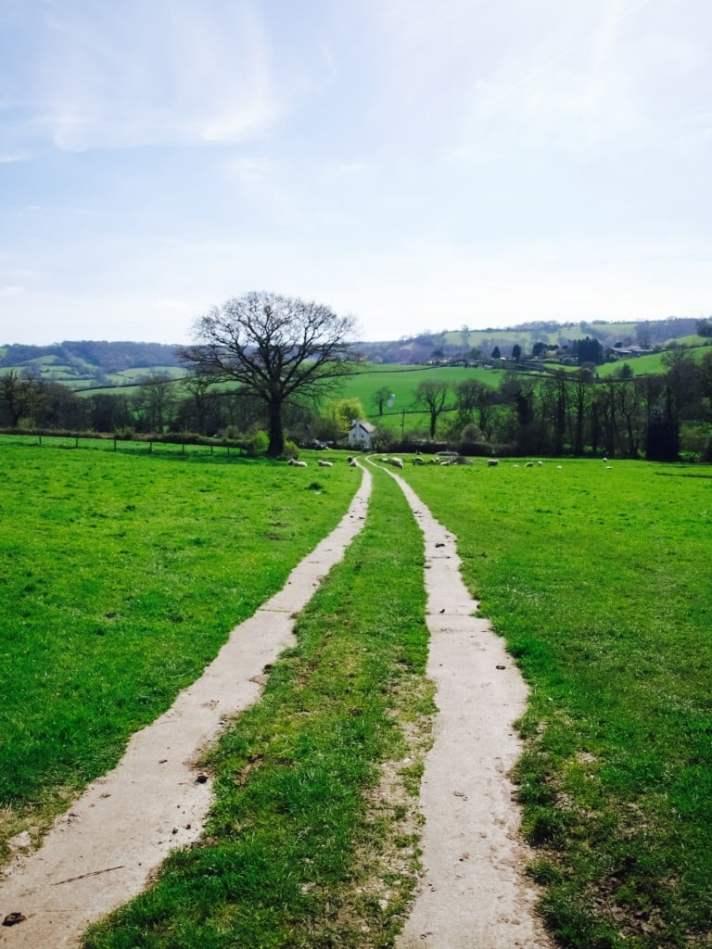 Devon in spring