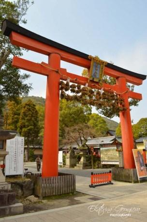 Тори-то на храма Мацуо / The torii gate of Matsuo taisha shrine