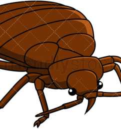 bed bug front right view vector cartoon clipart [ 1200 x 675 Pixel ]