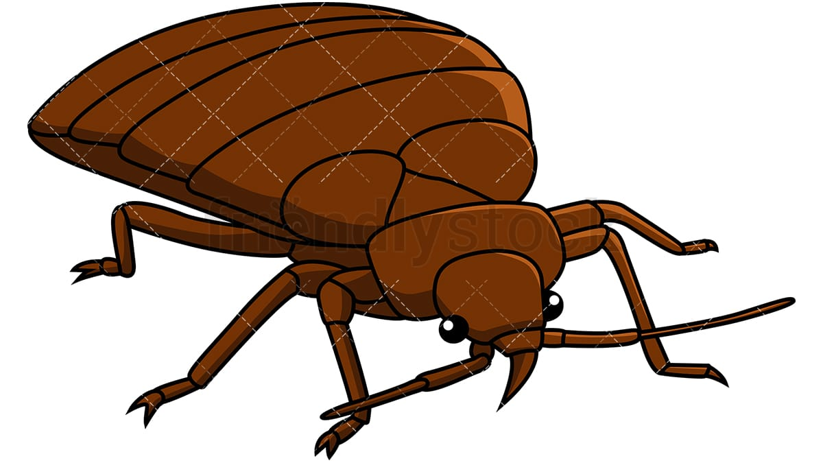 hight resolution of bed bug front right view vector cartoon clipart