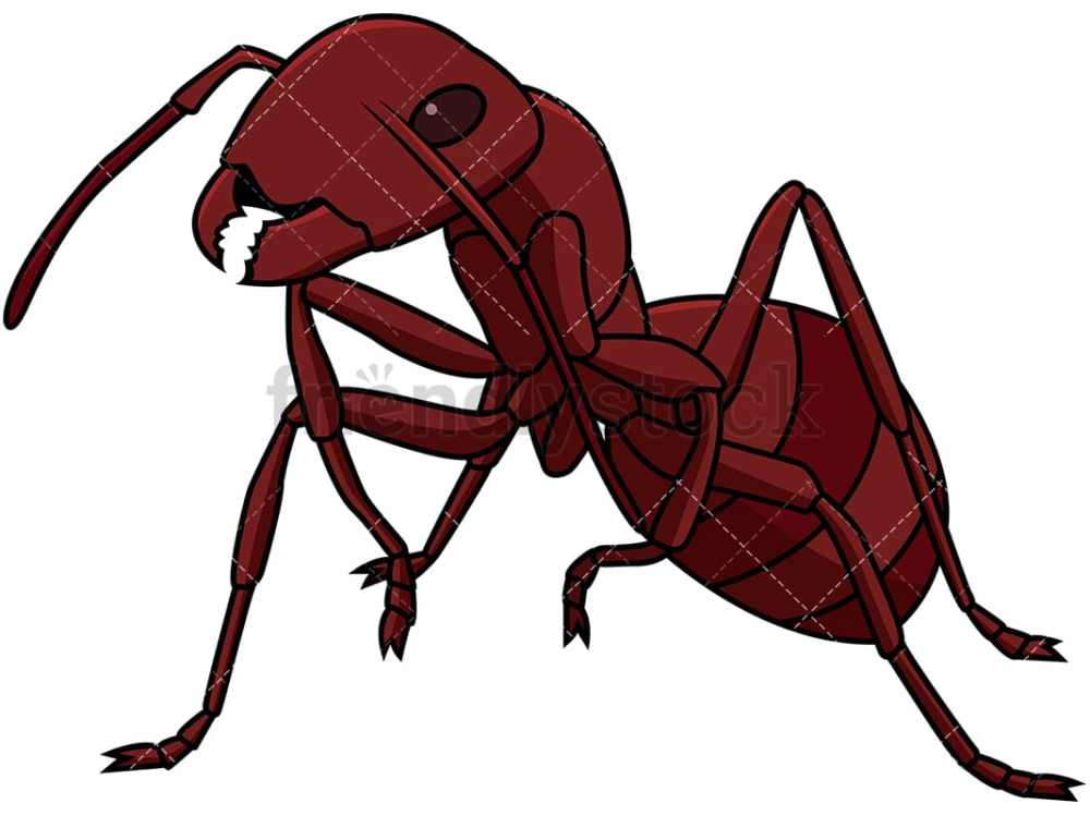 medium resolution of red ant close up vector cartoon clipart