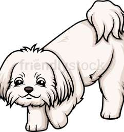 maltese sniffing vector cartoon clipart [ 1000 x 946 Pixel ]