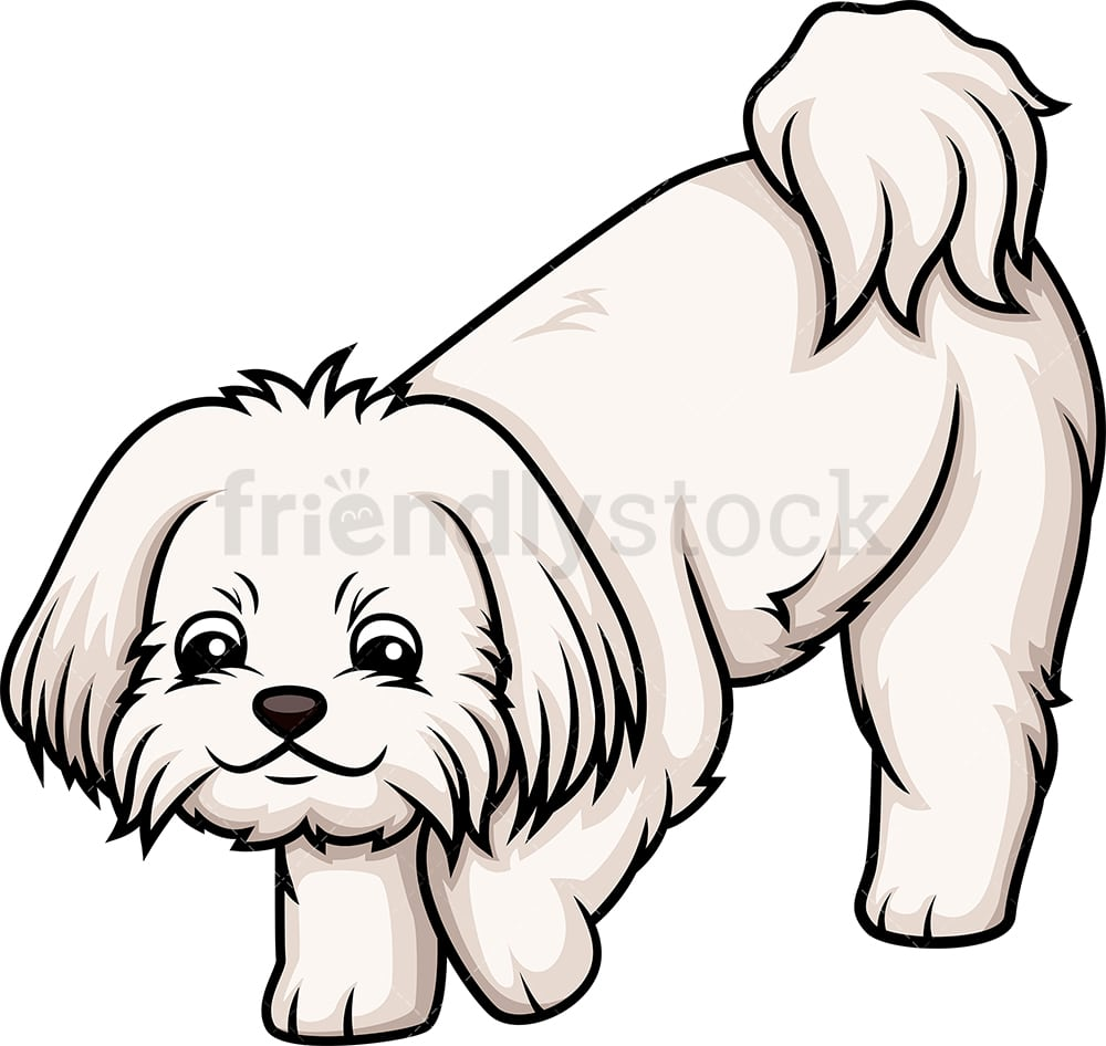 hight resolution of maltese sniffing vector cartoon clipart
