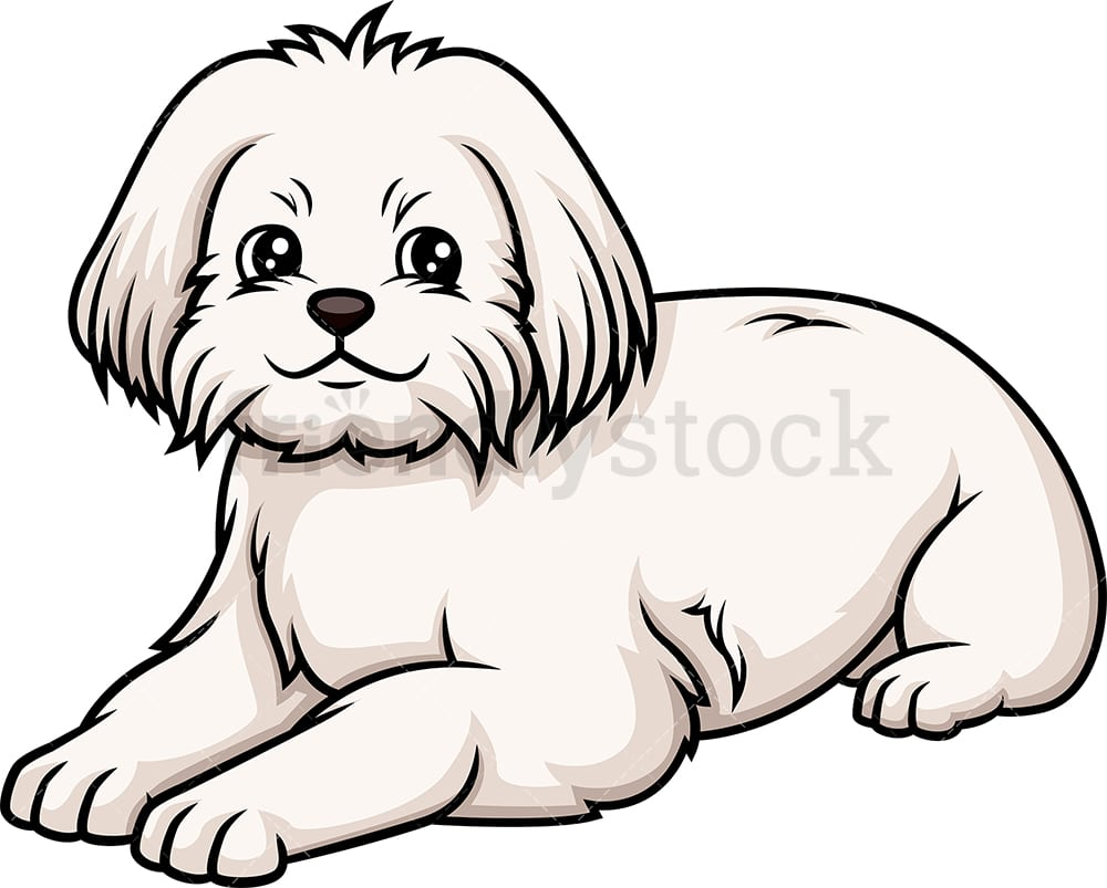 hight resolution of maltese lying down vector cartoon clipart