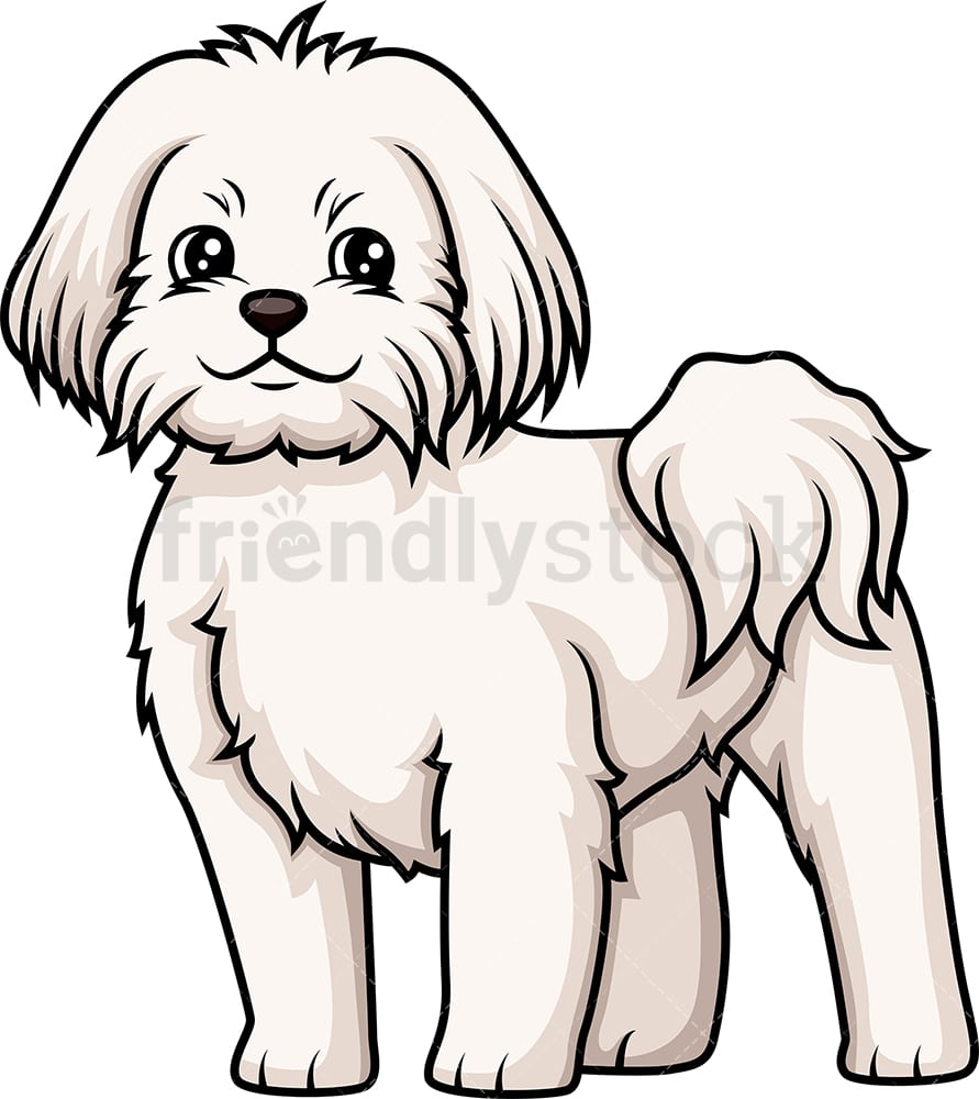 hight resolution of cheerful maltese vector cartoon clipart