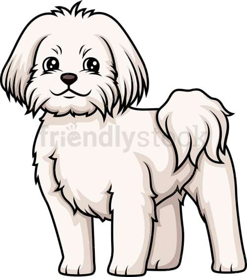 small resolution of cheerful maltese vector cartoon clipart
