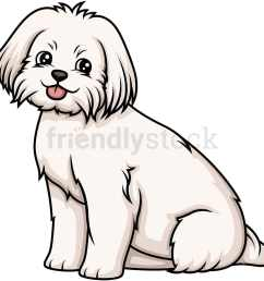 obedient maltese sitting vector cartoon clipart [ 1000 x 1000 Pixel ]