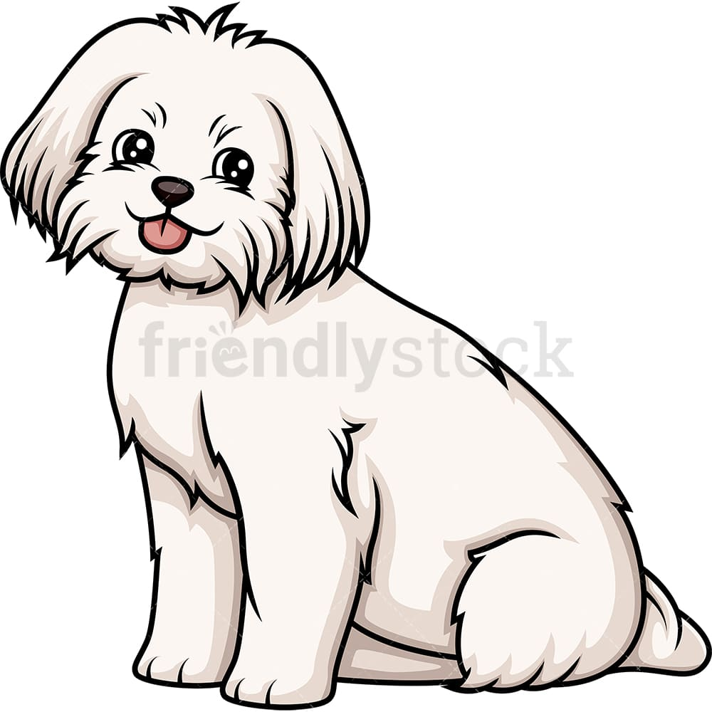 hight resolution of obedient maltese sitting vector cartoon clipart