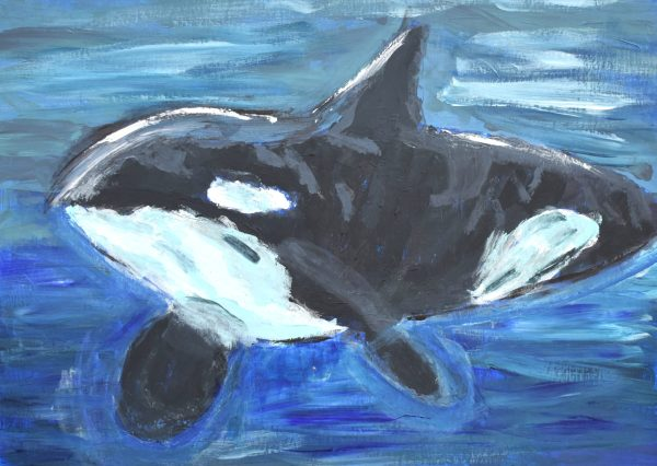 AD Free Willy 9×12 acrylic $45 6-19
