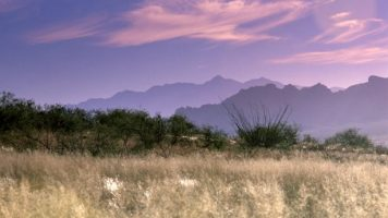 Refuge grassland