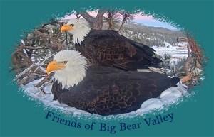 JAckie & Sibma in snowy nest