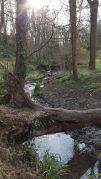 Brislington Brook heading away from St Anne's Well